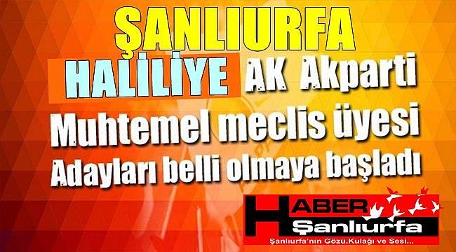 Haber Şanlıurfa Kulis / AK Parti Haliliye İlçe Belediye Meclis üye adayları
