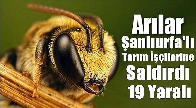Arılar Şanlıurfa'lı Tarım İşçilerine Saldırdı 19 Yaralı