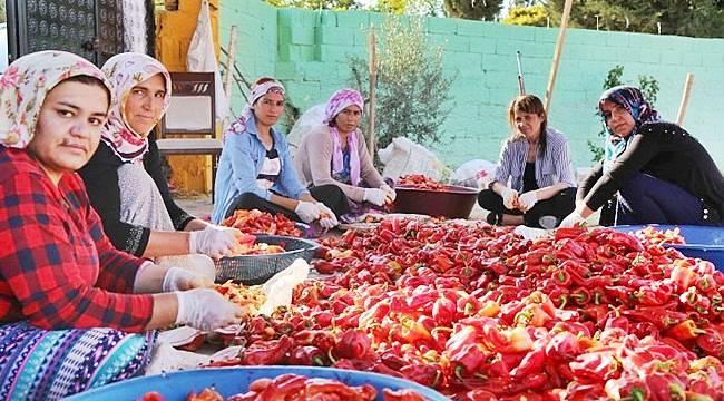 Suruç'lu Mevsimlik kadın işçiler 'Kibele Kooperatifi' kurdu
