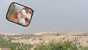 Urfa'da etkili olan Dolu ve Sağanak Yağış Tarım Alanlarına Zarar verdi
