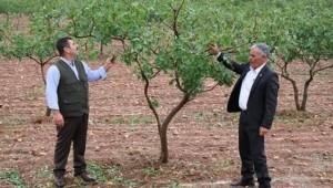 DEDAŞ'ın Uygulamaları Çiftçiyi Üretimden Çekiyor