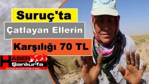 Suruç'ta Çatlayan Ellerin Karşılığı 70 TL