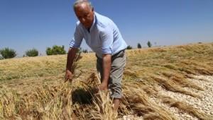 Suruç 'ta Patlayan Su Borusu Ekili Tarım Arazilerini Sular Altında Bıraktı