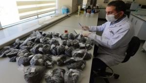 Harran Üniversitesi 80 Çeşit Çay Üzerinde Araştırma Yaptı