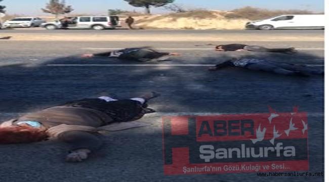 Şanlıurfa'da Arazi Kavgası : 4 Ölü 2 Yaralı
