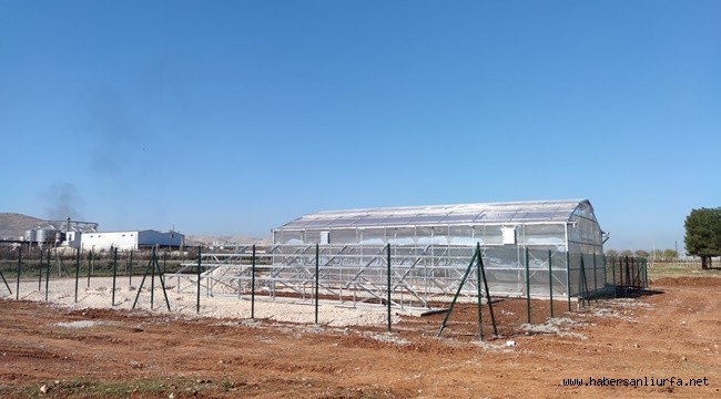 Şanlıurfa'da Güneş Enerjisi ile Yaş Sebze Kurutma Tesisi Kuruluyor