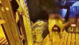 Siverek'te Yolcu Otobüsünde 10 kilo Esrar Ele Geçirildi