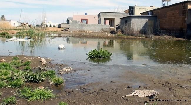 Suruç'ta Suya Hasret Kalmış Topraklar Bataklığa Döndü