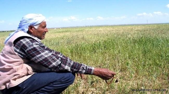 Urfa'da 20 Yılın En Ağır Kuraklık Dönemi Yaşanıyor