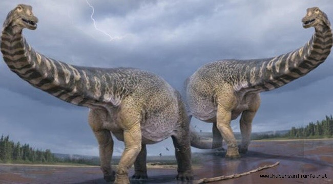 Avustralya'da 67 Tonluk Dinozor Fosili Tespit Edildi
