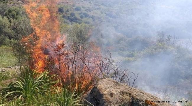 Haliliye'de Örtü Yangını!