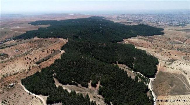 Urfa'da Ormana Girişler Yasaklandı